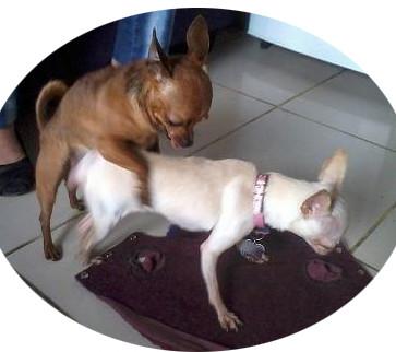 Sexo con perro macho