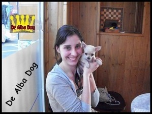 Foto cachorro chihuahua hembra de color crema y pelo corto de los criadores de perros de raza chihuahua De Alba Dog, venta de cachorros chihuahua de pelo corto y largo con pedigree y afijo en Valencia, Comunidad Valenciana, España