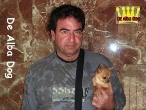 Foto cachorro chihuahua macho de pelo corto de los criadores de perros de raza chihuahua De Alba Dog, venta de cachorros chihuahua de pelo corto y largo con pedigree y afijo en Valencia, Comunidad Valenciana, España