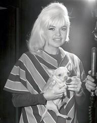 Foto en blanco y negro de la actriz estadounidense de teatro y cine Jayne Mansfield con su perro de raza chihuahua