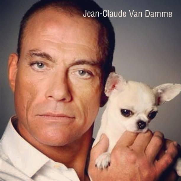 Jean Claude Van Damme posando con un perro de raza chihuahua de pelo corto y color blanco de línea inglesa