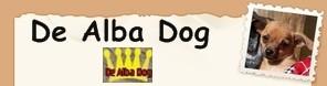 Foto de perro cachorro de raza chihuahua macho de pelo corto de los criadores de chihuahua con afijo De Alba Dog de Valencia, Comunidad Valenciana, España, venta de chihuahuas, cachorros chihuahua de pelo corto y largo en venta