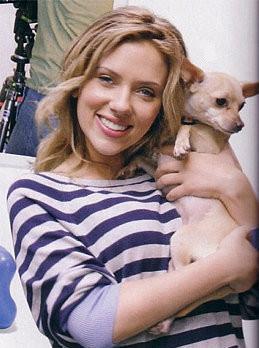 Foto de Scarlett Johanson con su chihuahua de pelo corto y color dorado