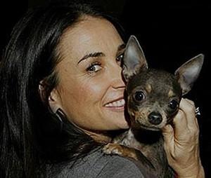 Foto de Demi Moore con su perro de raza chihuahua de pelo corto y color azul-fuego