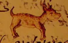 Imagen del techichi. Historia y origenes del perro de raza chihuahua o chihuahueño.