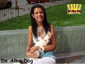 Foto cachorro chihuahua macho de color blanco y pelo largo de los criadores de perros de raza chihuahua De Alba Dog, venta de cachorros chihuahua de pelo corto y largo con pedigree y afijo en Valencia, Comunidad Valenciana, España