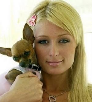 Foto de Paris Hilton con su chihuahua Tinkerbell