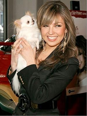 Foto de Thalia con su perro de raza chihuahua de pelo largo y color blanco