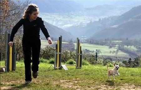 Perro de raza chihuahua adulto con su entrenadora de agility, primer perro chihuahua en España en hacer agility