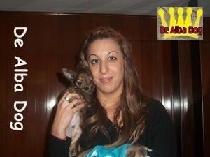 Foto cachorro chihuahua macho de atigrado y pelo largo de los criadores de perros de raza chihuahua De Alba Dog, venta de cachorros chihuahua de pelo corto y largo con pedigree y afijo en Valencia, Comunidad Valenciana, España