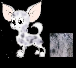 Dibujo de un perro de raza chihuahua de color merle y pelo corto. Colores del chihuahueño. Chihuahua color mirlo.