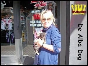 Foto cachorro chihuahua macho de color negro-fuego y blanco y pelo corto de los criadores de perros de raza chihuahua De Alba Dog, venta de cachorros chihuahua de pelo corto y largo con pedigree y afijo en Valencia, Comunidad Valenciana, España