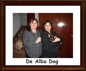 Foto cachorro chihuahua hembra de color negro-fuego y pelo largo de los criadores de perros de raza chihuahua De Alba Dog, venta de cachorros chihuahua de pelo corto y largo con pedigree y afijo en Valencia, Comunidad Valenciana, España