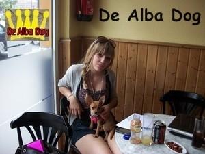 Foto cachorro chihuahua hembra de pelo corto de los criadores de perros de raza chihuahua De Alba Dog, venta de cachorros chihuahua de pelo corto y largo con pedigree y afijo en Valencia, Comunidad Valenciana, España