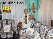 Foto de perro de raza chihuahua macho de pelo largo de color rojo de los criadores de chihuahua con afijo De Alba Dog de Valencia, Comunidad Valenciana, España, venta de chihuahuas, cachorros chihuahua de pelo corto y largo en venta