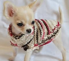 Foto de perro cachorro de raza chihuahua de color crema
