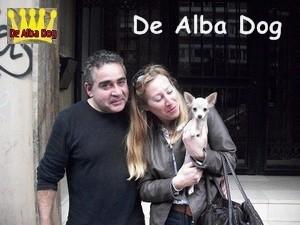 Foto cachorro chihuahua hembra de pelo corto y color crema de los criadores de perros de raza chihuahua De Alba Dog, venta de cachorros chihuahua de pelo corto y largo con pedigree y afijo en Valencia, Comunidad Valenciana, España