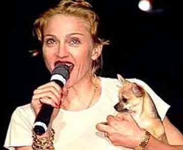 Foto de Madonna y su chihuahua de pelo corto