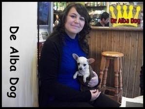 Foto cachorro chihuahua macho de color crema y pelo corto de los criadores de perros de raza chihuahua De Alba Dog, venta de cachorros chihuahua de pelo corto y largo con pedigree y afijo en Valencia, Comunidad Valenciana, España