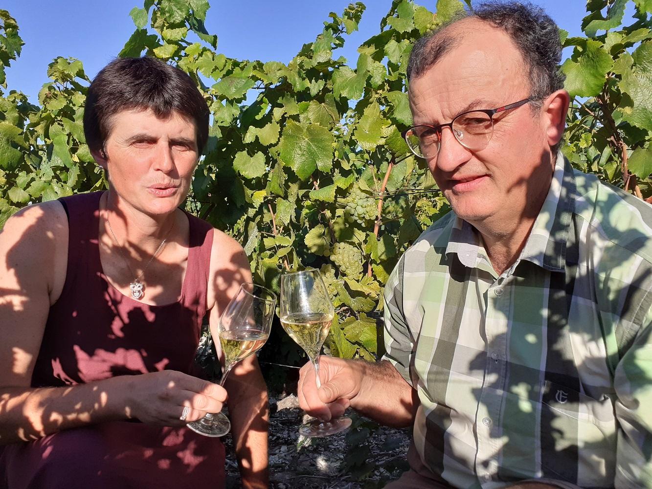 dégustation au milieu des vignes