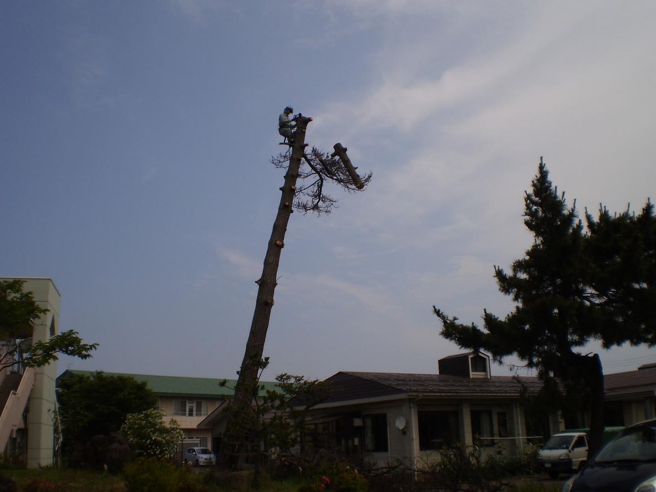 枝の伐採を終えたところで、今度は幹を切り刻みます