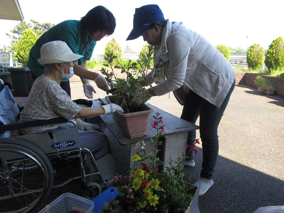 植物療法士・五十嵐さんのご支援の下、プランターに植えていきます