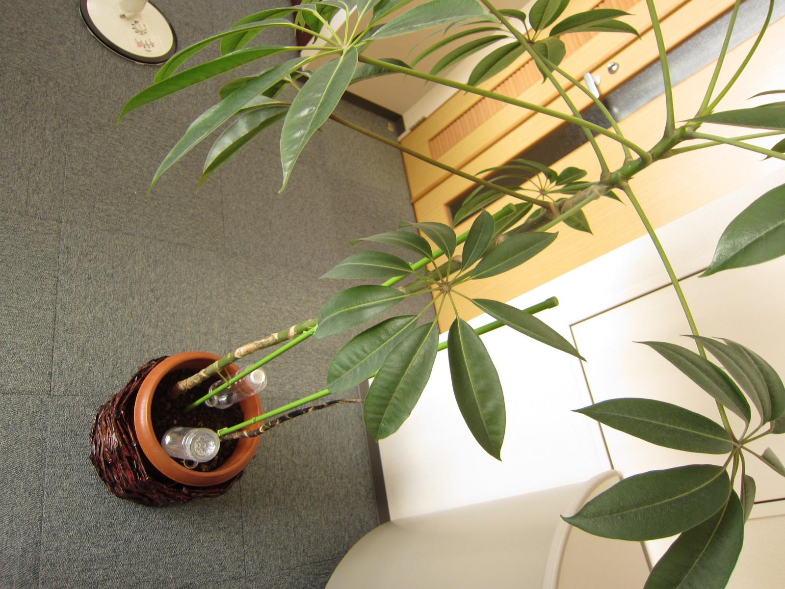 でも、植物が生き生きと見えます!