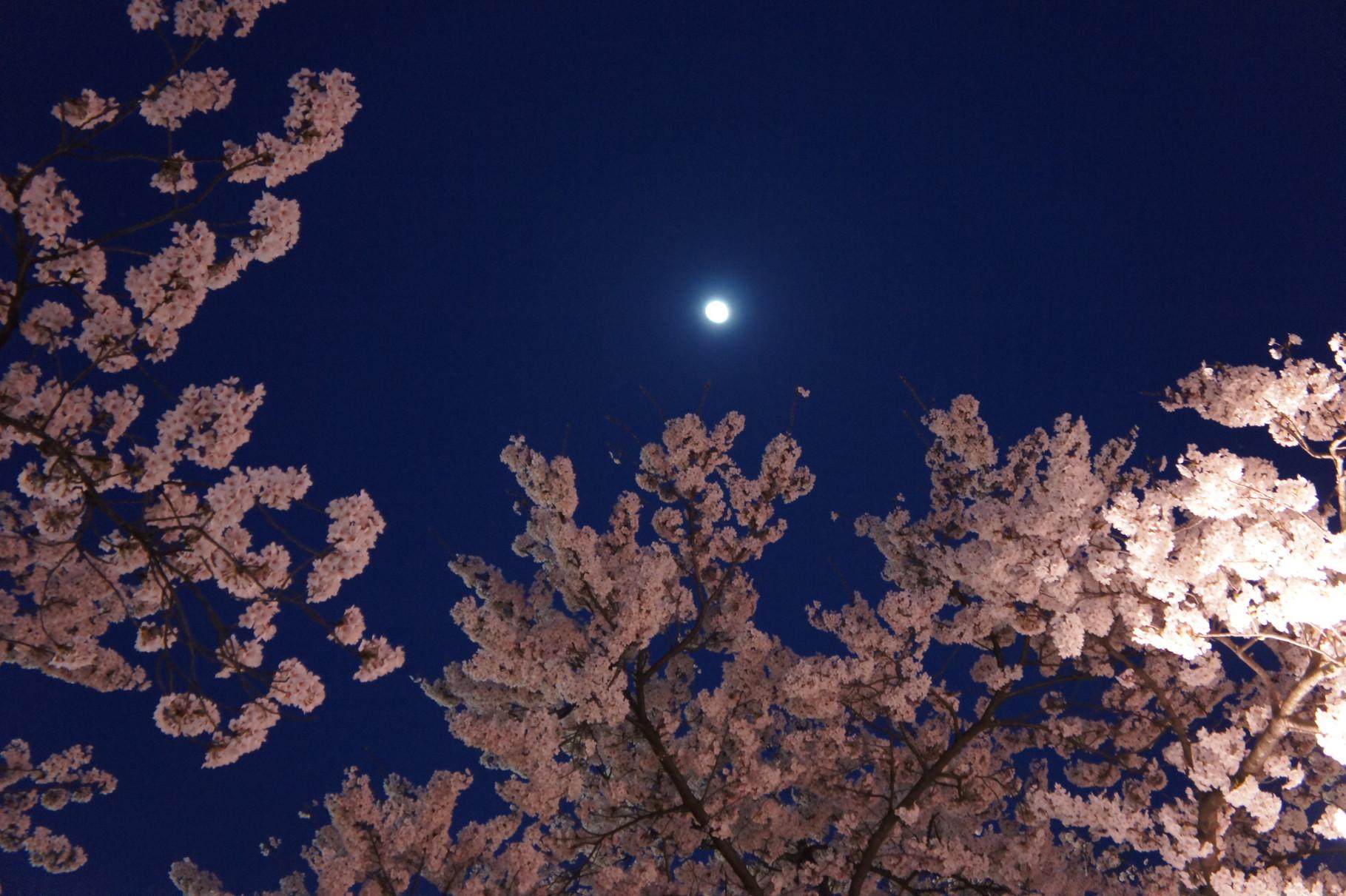 あっ、月が出ました