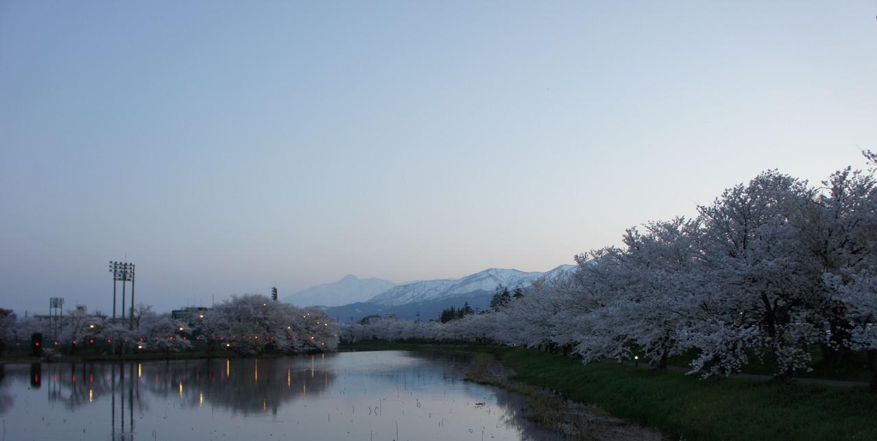 お堀を囲む満開の桜