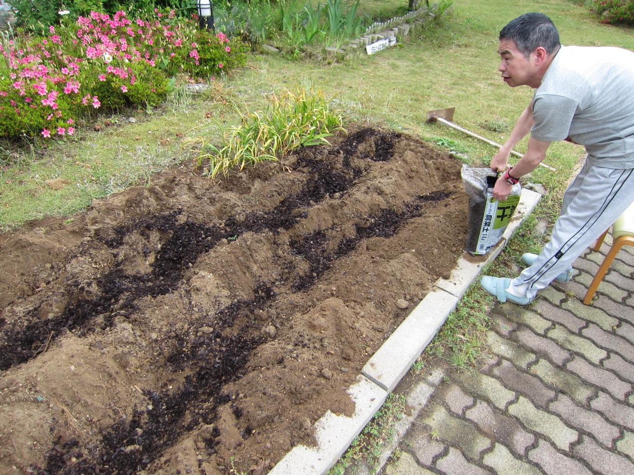 後半開始。腐葉土を投入