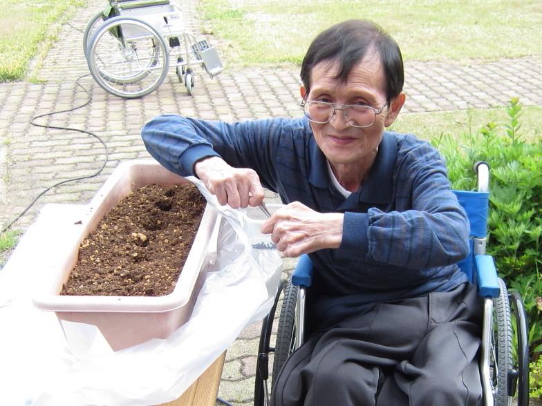 小さな種をピンセットでつまんで植えます