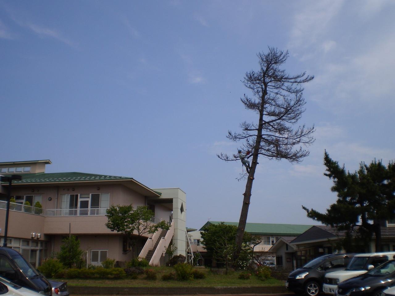 職人さんがロープ一本で木に登っていきます