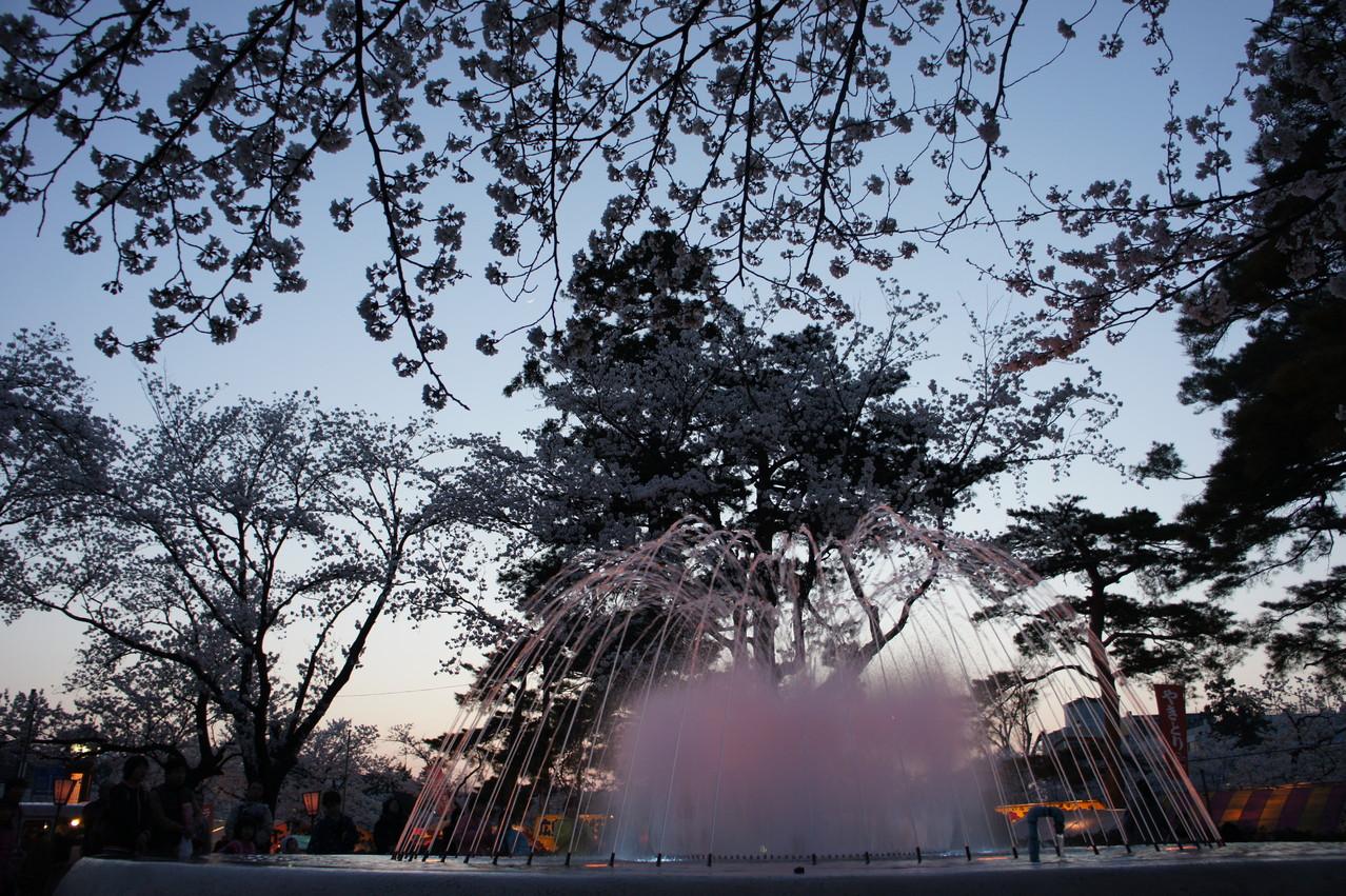 噴水と桜の共演
