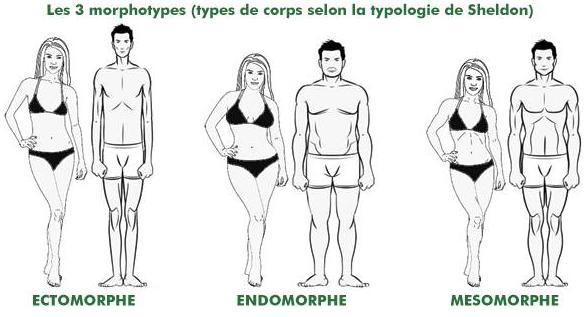 La typologie de Sheldon distingue les types morphologiques en trois classes et autant de types de corps. Découvrez les 3 somatotypes.