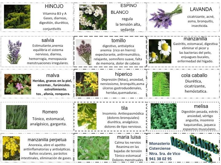 Plantas medicinales monasteriodevico for Mezclas de plantas medicinales
