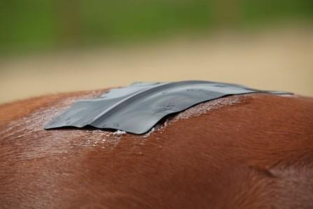 Silikonelektrode auf das Tier platzieren