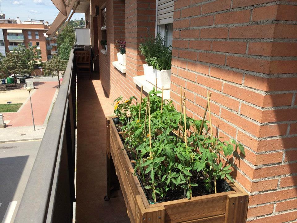 Huerto urbano en tu balcon
