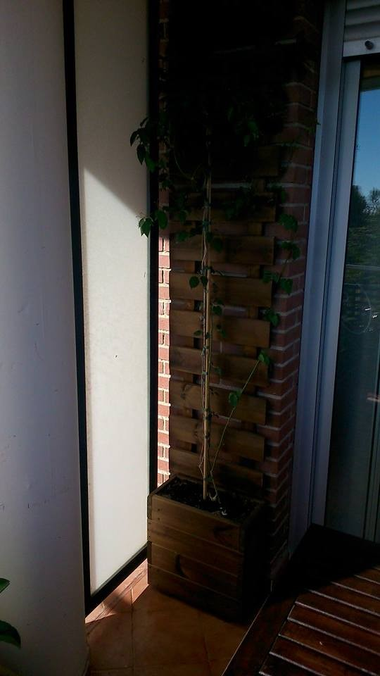 Jardineras + celosia de pared