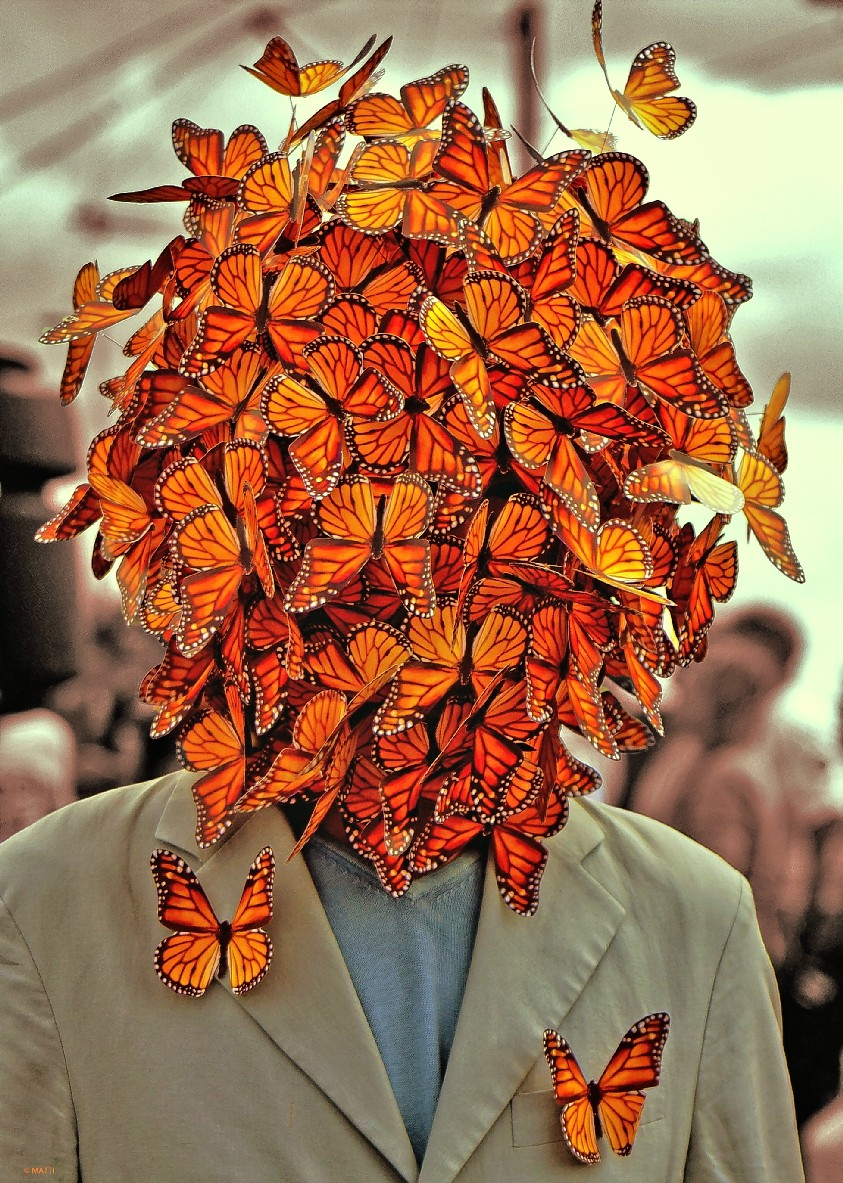 the butterly man