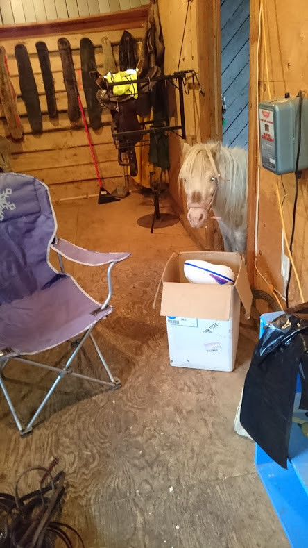 the pony was supervising the process