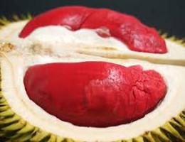 Durian rouge, un met apprécié et rare