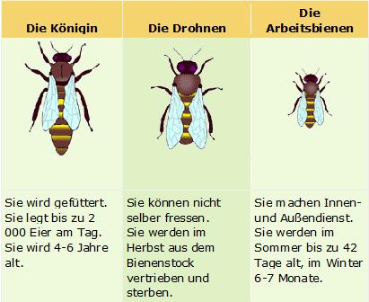 Bienenvolk - Imkerverein Maria Schmolln
