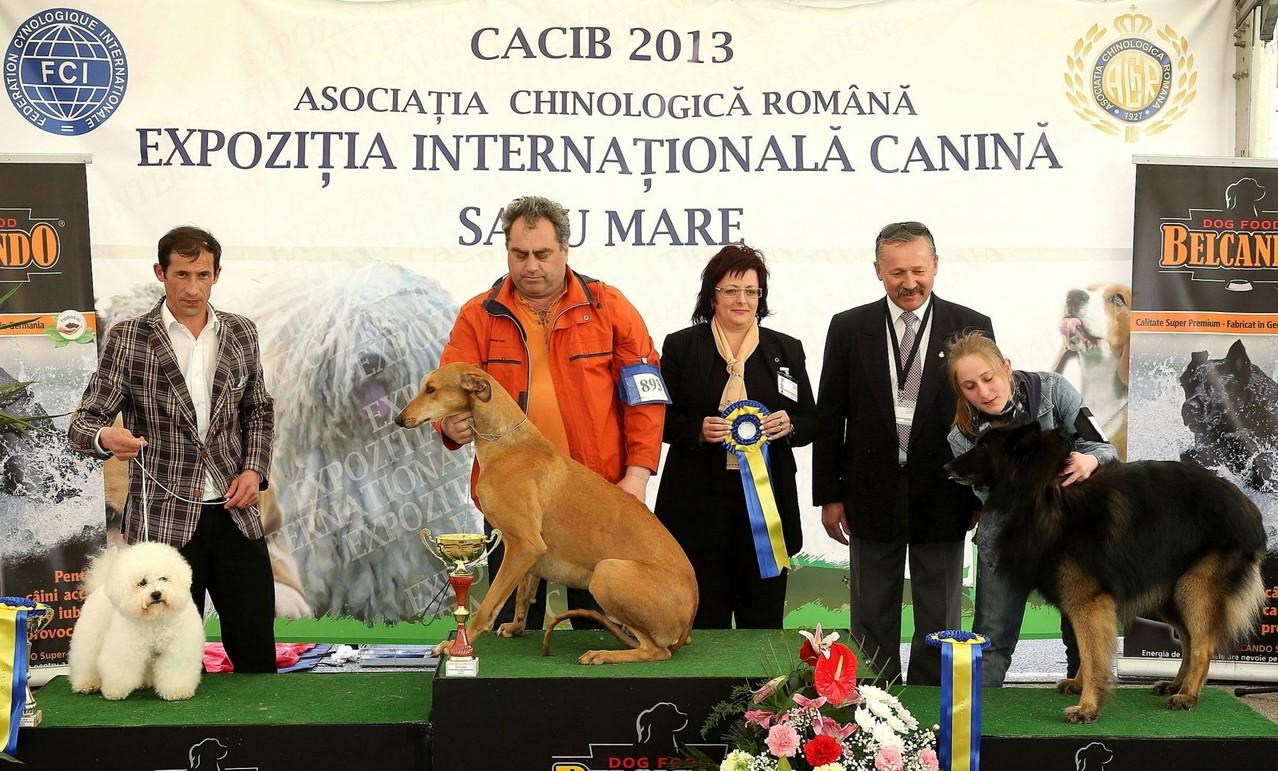 Tar Kristina (judge fci), Satu Mare 2013
