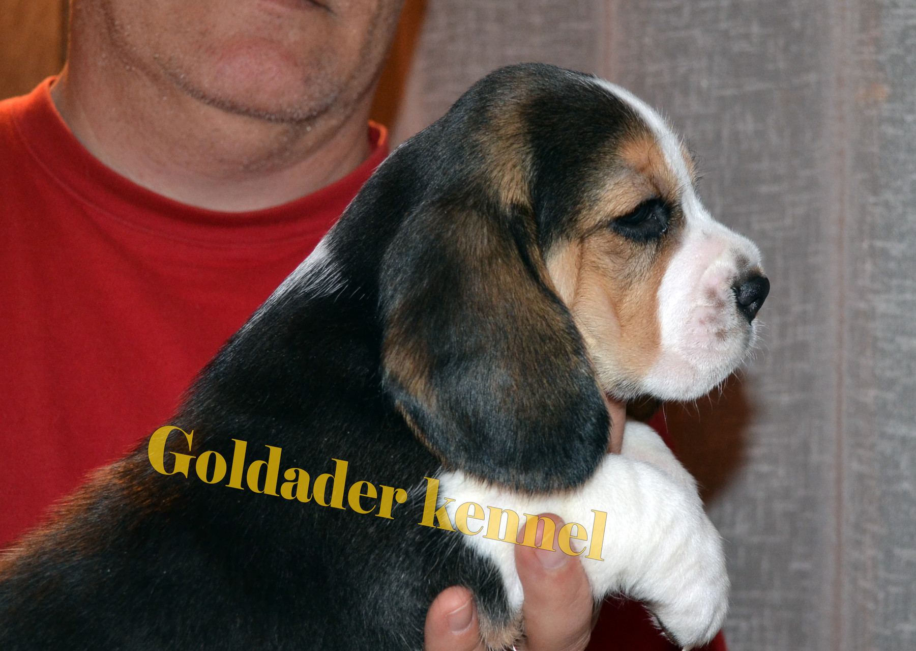Goldader Vertu, 5weeks