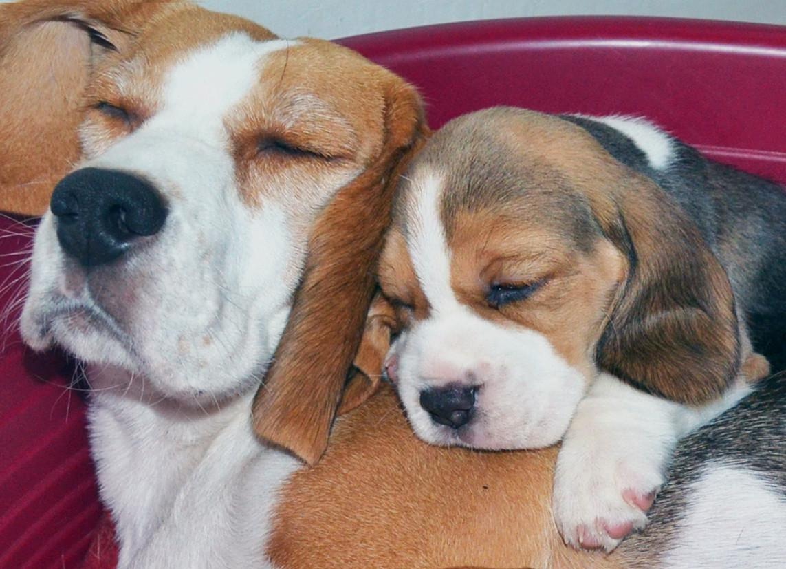 Eliska with pup