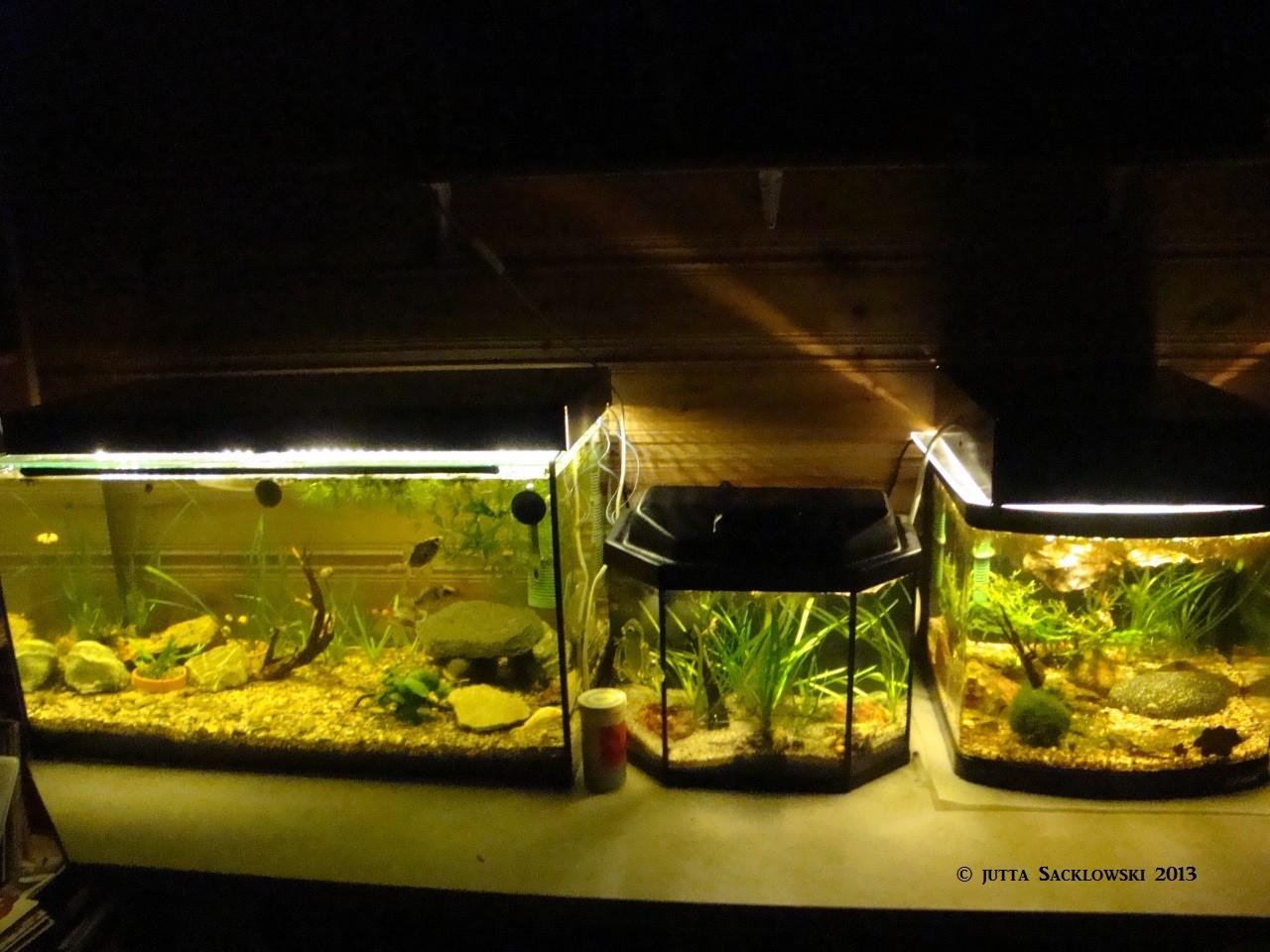 Aquarien im Gästezimmer