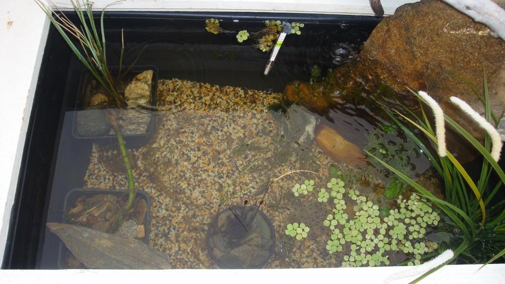 Blick in unseren kleinen Teich