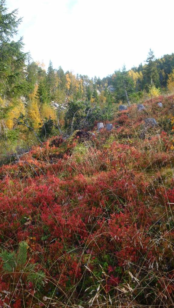 Hang in Herbstfarben