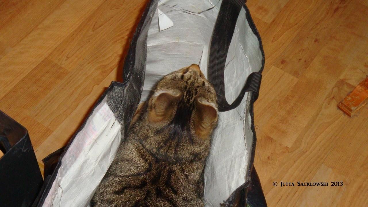 Itzy liebt unsere Holztaschen als Versteck