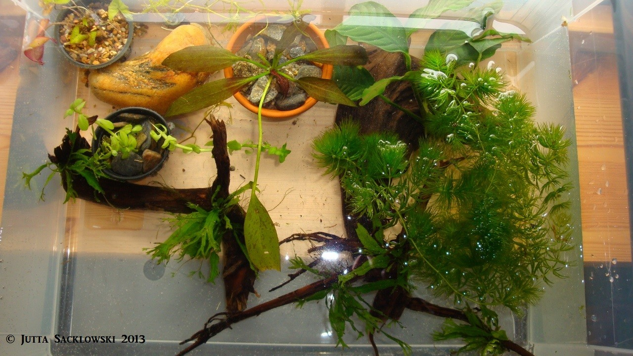 Aufgebundene Pflanzen, und vorbereitete Töpfe
